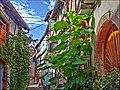 Rue du Rempart Nord, Eguisheim, Alsace - panoramio (2).jpg