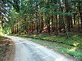 Rumšiškių miškas 3.JPG