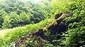 Rumanian Forest, Carpatos Mountains 19.jpg