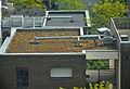 Sédums terrasse végétalisée green roof.JPG