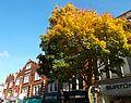 SUTTON, Surrey, Greater London - High Street (7).jpg