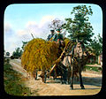 Saint Petersburg farmers transporting hay, near Leningrad.jpg