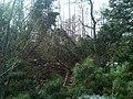 Sakhalin's nature. 05.jpg