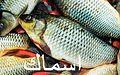 Samaki is Arabic word for fish (6819438351).jpg
