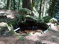Sankt Märgen, St. Judas-Thaddäus-Brunnen 5.jpg
