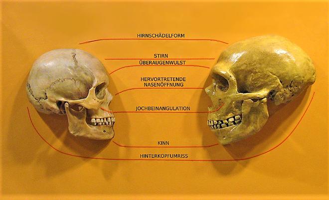 Was ist mit fossiler Datierung gemeint