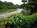 Sarapiqui river (2).jpg