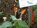 Schmetterlingsgarten Ludwigslust - geo.hlipp.de - 5593.jpg