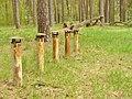 Schmoeckwitzer Wald - Nichtrauchergebiet! (Schmoeckwitz Wood - Non-Smoking Area!) - geo.hlipp.de - 35749.jpg
