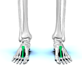 Second metatarsal bone01.png