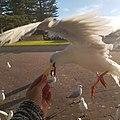 Semaphore South Australia.jpg