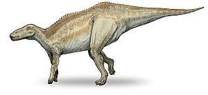 Shantungosaurus - Restoration