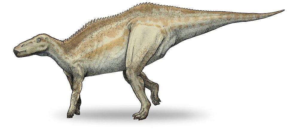 Shantungosaurus-v4
