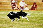 Sheep Dog Display (2621831602).jpg
