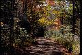 Shenandoah National Park SHEN9220.jpg