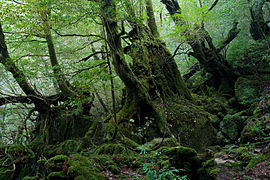 Shiratani Unsui Gorge 17.jpg