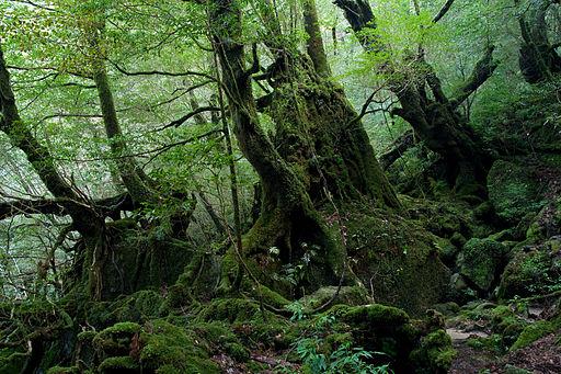 Shiratani Unsui Gorge 17