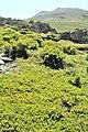 Sierra de Ayllón 1979 03.jpg