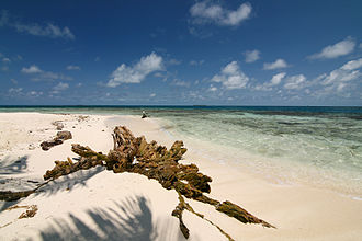 Gladden Spit and Silk Cayes Marine Reserve - Beach on Silk Caye