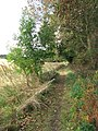 Skirting a woodland's edge - geograph.org.uk - 1532718.jpg