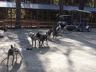 Sled Dog Discovery & Musher's Camp 13.jpg