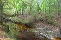 Slope forest, Big Thicket NP, Big Sandy Creek, Polk Co. TX; 23 Mar 2020.jpg