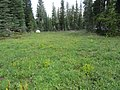 Small Meadow in Desolation Wilderness - panoramio.jpg