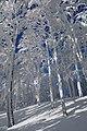 Sninský kameň (v zime) 078.jpg