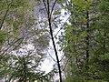 Soca-trail-49.jpg