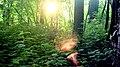 Soleil levant a Brompton groove - panoramio.jpg