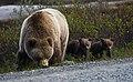 Sow and Spring Cubs (9ebe7e7b-2ca1-4801-b3d6-50cae3dd3740).jpg