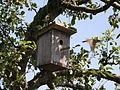 Sparrow flying from bird house.jpg