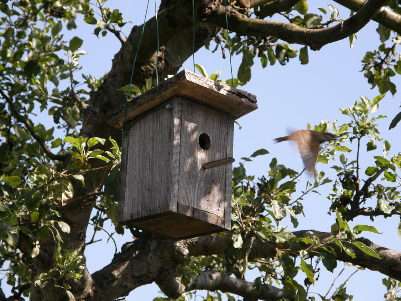 File sparrow flying from bird wikimedia commons for Types of birdhouses for birds