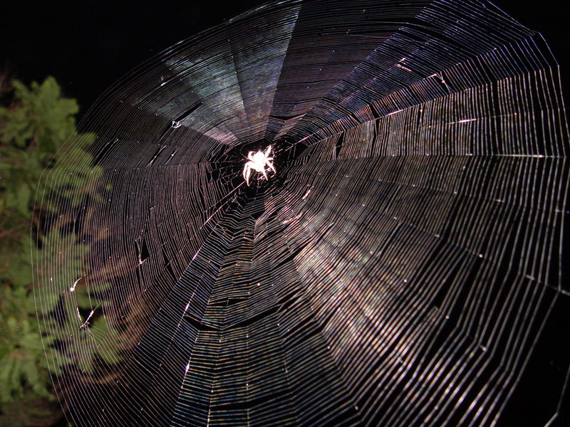 File:SpiderWeb.jpg
