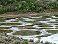 Spotted Lake - panoramio.jpg