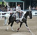Spotted Saddle Horse (2692908296).jpg