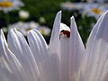 Spring in Iran-Qom City (18).jpg