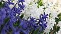 Spring in botanic garden - Cluj-Napoca (3438791263).jpg