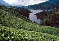 Sri Lanka Teeplantage.jpg