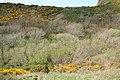 St Gennys, path to ridge - geograph.org.uk - 1267867.jpg