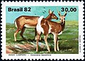 Stamp of Brazil - 1982 - Colnect 261413 - Pampas Deer Odocoileus bezoarticus.jpeg