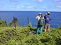 Starr-021012-0017-Sphagneticola trilobata-Moku Hala with Kim and Lance-Pauwalu Pt-Maui (23924723084).jpg