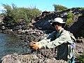 Starr 041028-0180 Casuarina equisetifolia.jpg