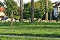 Stary cmentarz żydowski w Łomży 3.JPG