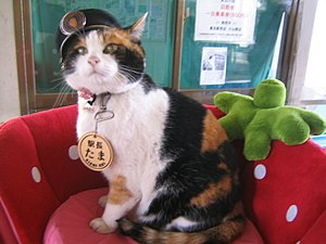 Tama (cat) - Tama in February 2007, wearing her station master's hat