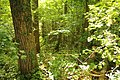 Steenbergse bossen 25.jpg