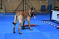 Steve Powell Dog Training Space.jpg