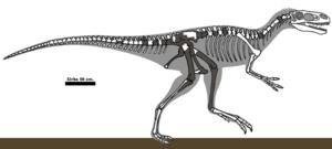 Juratyrant - Restoration illustrating known fossil remains in gray
