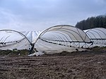 Strawberry fields forever Poly-tunnels are a source of much controversy among rural inhabitants of Herefordshire.