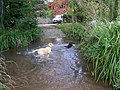 Stream, North Wootton - geograph.org.uk - 1562874.jpg